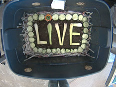 setup eggcrate LIVE feeding
