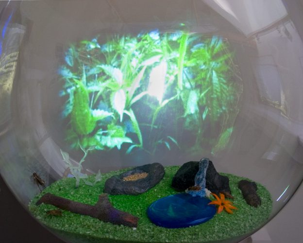 Holodeck for House Crickets