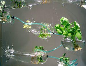 Hydroponic Solar Garden