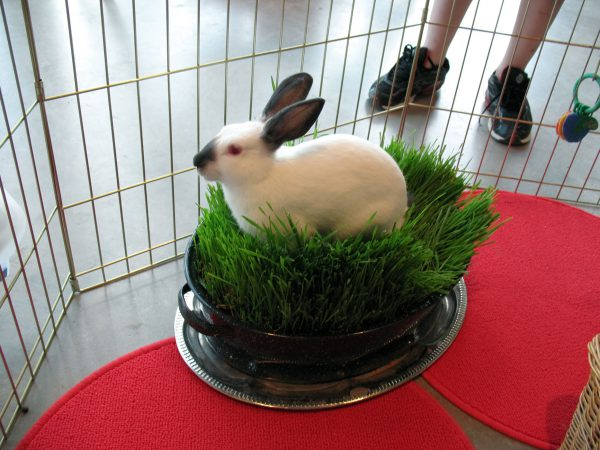 Eddy in the wheatgrass