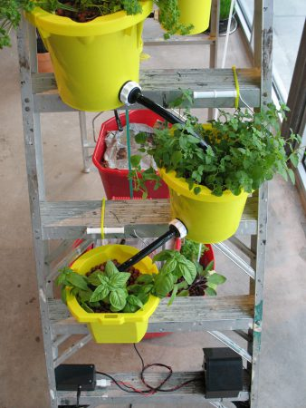 Oregano and basil in the system