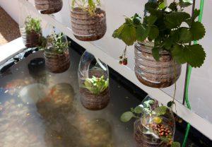 Solar Farm Fountain