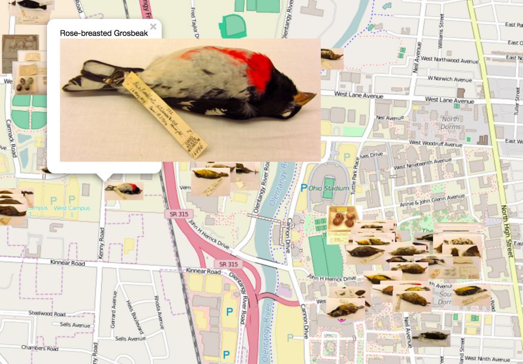 BioPresence Dead Bird Map