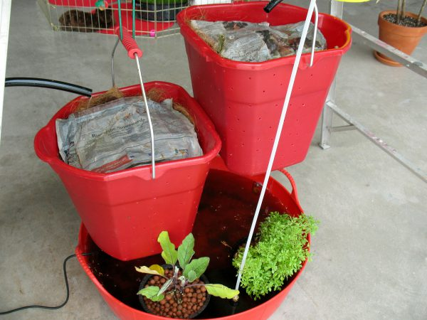 worm buckets with eggplant and basil