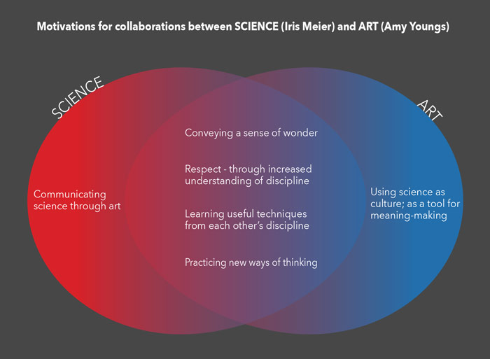 Science and Art Diagram by Amy M. Youngs