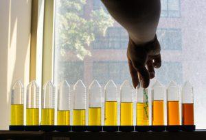 marigold-dye-extration