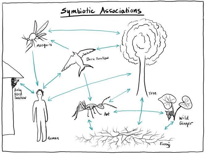 Becoming Biodiversity planning sketch