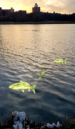 Augmented reality carp in Willow Lake